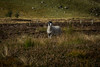 Sheep (Lynsay87) Tags: glenesk angus invermark edzell scotland hills scenery