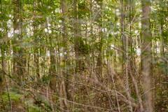 Thicket (pni) Tags: tree twig bush leaf forest trunk branch multiexposure multipleexposure tripleexposure espoo esbo finland suomi pekkanikrus skrubu pni