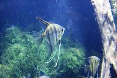 IMG_5647 (godpasta) Tags: newportaquarium kentucky newport aquarium