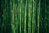 Phantasies Behind (toletoletole (www.levold.de/photosphere)) Tags: paris xpro2 fuji fujixpro2 abstract abstrakt nature natur bambus bamboo green grün