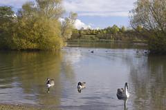 5_FarcetParkJpeg_DSC1143 (Kung Fu Jim) Tags: nature water sky bird trees