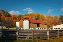 Fall at Sunnybrook Farm (A Great Capture) Tags: stables bluesky automne fence barn colorful colourful leaveschangingcolour trees toronto park autumn fall farm sunnybrook sunset atardecerwoods leaves leaf foliage architecture outdoor outdoors vibrant cheerful vivid bright eos digital colours colors agreatcapture agc wwwagreatcapturecom adjm on ontario canada canadian photographer northamerica ash2276 ashleylduffus ald mobilejay jamesmitchell herbst 2016
