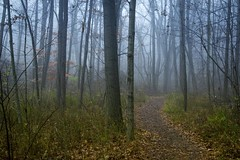 Walking the Ravines park (Kevin Povenz Thanks for the 2,800,000 views) Tags: 2016 november kevinpovenz westmichigan michigan ottawa ottawacounty ottawacountyparks grandravinesnorth forrest woods trail fog foggy canon7dmarkii afternoon walk tree trees blue green mist misty