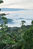 Panama City Skyline (Hamilton Images) Tags: panamacityskyline tropicalforest clouds mist canopytower panama centralamerica canon 7dmarkii 24105mm october 2016 img4969