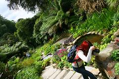 Photographer's paradise (Zozu9) Tags: trebahgardens cornwall garden nature lush plants photographer paradise pathway gardens