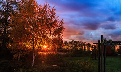 IMG_2935 (Luitz Schipper) Tags: burnaby fraserforeshorepark leaves autumn river