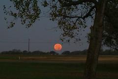DSC00473 (carrie_20001jf) Tags: supermoon moon morning night astronomy texas sky texassky supermoon2016 2016 skyporn nature texasnature