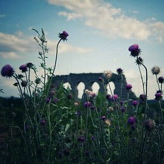 . . . #roma #rome #italy #whatitalyis #igersroma #parcodegliacquedotti #parco #park #summer #romanruins #ancientrome #acquedotto #aqueduct #ruins #flowers #nature #giu12 (.taz.) Tags: instagramapp square squareformat iphoneography uploaded:by=instagram ginza rome roma italy park nature flowers parcodegliacquedotti ancientrome ruins romanruins aqueduct