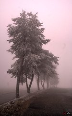 Nebel und Eis am Estelberg