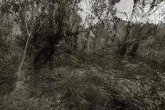 untitled (Kenneth Rowe) Tags: multipleexposures tankhill blackandwhitelandscape blackandwhite monochrome monochromia