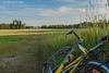 Summer in Moravia | Lato na Morawach (Szymon Wiatr) Tags: morawy moravia moravskoslezsky evening summer leto ljeto lato letni afternoon popołudnie morawski czechy czechia czech rower bicycle pohansko breclav brzecław morawa morava green meadow łąka luka