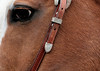 Here's looking at you (howardj47) Tags: howardj canon5d mark111 horse