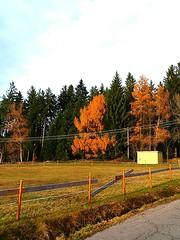 SCHWARZWALD IM HERBST (ehbub@yahoo.de) Tags: nadelbaum schwarzwald laubbaum wiese feldweg