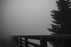 Fog (donlunzo16) Tags: nikon df dƒ raw nef vsco film pack vignette 2 x nd filter nikkor ais lens manual 24mm f12 bw black white blackwhite fence fog tree