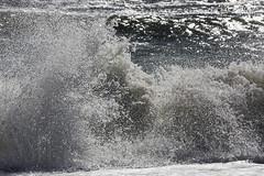 161024-1129-Katama (Sterne Slaven) Tags: massachusetts plymouth marblehead capecod marthasvineyard edgartown oakbluffs vineyardhaven salem lynn turkeyvulture seawall tide waves seaweed historic october sailboats lighthouse hightide lowtide wildturkeys offseason canoe sunset fisherman seagulls gulls nakedwoman lensbaby katamabeach lucyvincentbeach gayhead chappaquiddick lagoon bramble whalingchurch seacreature cemetery plimothplantation roosters spiderwebs oldburialhill pilgrims clamdiggers sanddunes barnstable taunton sexynude sunhalo fullmoon sterneslaven water fountain 1600s wampanoag mayflower pelt harbor chathamma seals ocean atlanticocean coastal newengland actors