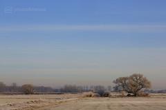 sunday morning 04.12.2016 -p4d- 024 (photos4dreams) Tags: sundaymorning04122016p4d winter photos4dreams p4d photos4dreamz photo rauhreif frosty rime hoarfrost walk sunny sonnenschein sonne landschaft landscape