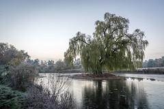Frosty in the Garden (Jannik Peters) Tags: sony gm 2470 28 master g garden lake ice frost tree
