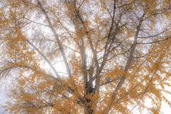 () Tags: fall tree leaf color 2016