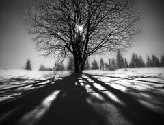 _DSC0365bw2 (grzegorz_fibak) Tags: 2015 innesowakluczowe narty sowacja bahledova dolina