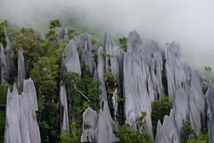 Pinnacle details (Bryn Tassell) Tags: borneo jungle mala malaysia mulu tropical pinnacles trekking limestone mount api mountapi