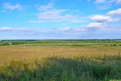 Тишина, полное безлюдье. Нирвана уже где-то совсем близко. Козловский лес раскинулся вдоль берега реки Битюг.