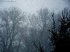 Winter (Natali Antonovich) Tags: belgium belgique belgie winter nature snow snowfall tree christmas christmasholidays montmartre tervuren