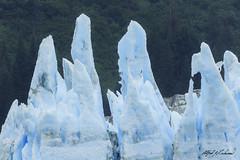 Sentinels - HFF (Alfred J. Lockwood Photography) Tags: alfredjlockwood nature landscape glacier mearesglacier ice forest fjord princewilliamsound valdez alaska summer overcast borealforest