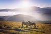 Amor equino (Mimadeo) Tags: horse horses animal caress caressing love cuddle couple romantic fondness cuddling mountain two mountains landscape urkiola