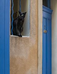 Le Chat Noir at No. 7-Saint Tropez (Gordon-Shukwit) Tags: provence sainttropez