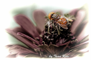 IMG_4773_Fly