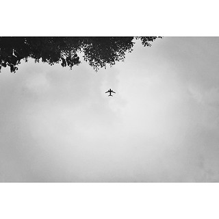 Into the wild #instagram #instadaily #monoart_ #monochrome #blackandwhite #bw #BestestAward