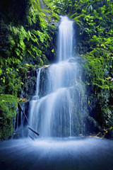 Beautiful Lush Waterfall (skillenshane) Tags: park travel summer plant flower tree green fall tourism nature water floral beautiful rock stone speed creek garden flow hawaii waterfall leaf cool pond scenery colorful quiet natural outdoor relaxing scenic peaceful tranquility scene calm clear jungle serenity tropical environment flowing relaxation cascade tranquil