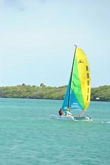 DSC_6100 (eric15) Tags: beach race cat surf sailing wind offshore competition surfing racing aruba international catamaran sail windsurfing regatta optimist sunfish 2014