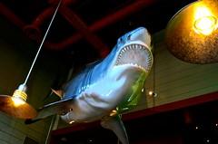 Land Shark Snl Land Shark Candy Gram