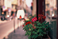 Geranium, Paris (Amelien (Fr)) Tags: film analog 50mm nikon fuji slide explore velvia fujifilm nikkor 50 fm3a argentique diapositive 193 rvp diapo pellicule 50f18 filmisnotdead explored inversible believeinfilm capturedonrealfilm