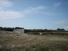 house & horse (Ladybadtiming) Tags: blue summer sky horse house nature beautiful landscape island quiet wide bretagne august land bliss batz