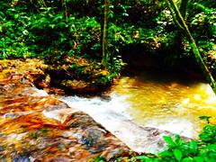 Riacho - Lago do Guedes8 (Hotel Amazon Jungle Palace) Tags: brasil hotel natureza selva beleza turismo manaus floresta luxo amazonas rionegro amaznia conforto rioamazonas riosolimes hotelaria iranduba sofisticao amazonjunglepalace