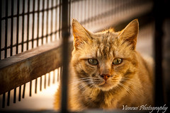 Ginger Cat (vienewi) Tags: street red portrait orange animal cat ginger crate ore homless canon400d efs55250mm