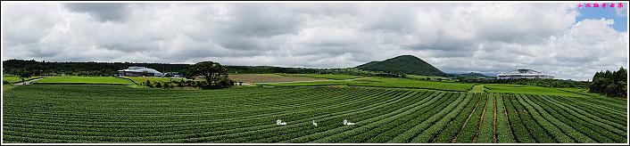 濟州島innisfree館 綠茶博物館 (71).JPG