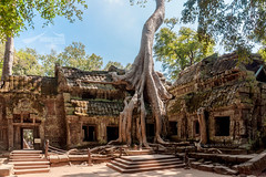 Temple of Ta Prohm, Angkor Cambodia