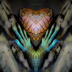 h e a r t f e l t (epiclectic) Tags: reflection animal photoshop mirror design graphic wildlife humor perspective manipulation images symmetry reflect symmetrical mutant twisted enhancement epiclecticcom epiflection epiflectionbyepiclecticcom