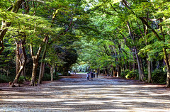 Autumun Promenade in Kyoto -   (ogawa san) Tags: shadow tree temple kyoto promenade    jinja autumun shimogamo