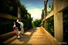 DSC_0010 (OJWilliamsUK) Tags: bridge sky dog happy walk happiness spaniel tounge cocker filters lomoish walkies marshes neville pevensey rspb britishbreeds