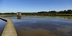Het Vinne  / Zoutleeuw / Belgi /Vogelkijkhut (jo.misere) Tags: natuur vinne zoutleeuw vogelkijkhut belgie belgium water vogels birds
