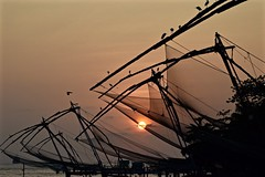 With the Egrets at Sunset (The Spirit of the World) Tags: egrets wildlife birds fowl nets chinesefshingnets fishing nature rigging bay sea arabiansea cochin kochi india kerala southernindia shoreline harbor fortcochin sun sunset light clouds evenng