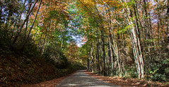 Climbing... (knoxnc) Tags: bluesky shadows dirtroad nikon outside fallenleaves forest fallleaves nature trees sunlight wood fall d7200 climbing