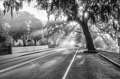 Baystreet sun rays (Sco C. Hansen (TheHansenGallery.com)) Tags: baystreet beaufort monochrome outdoors tree oak sc southcarolina blackwhite thebluff sunbeam sun rays lowcountry