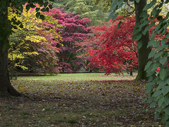 IMGP8823 (Roger Dickens) Tags: westonbirt trees acers autumn autumncolours gloucestershire