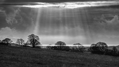 And there shall be light! (warth man) Tags: d750 nikon70300mmvr sun sky sunbeams rays light landscape monochromelandscape morecambebay trees silhouettes mono