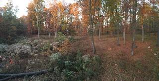 Kentucky Whitetail Hunt 4